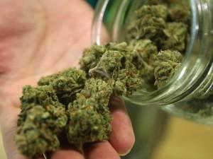 Cannabis Yield Per Plant